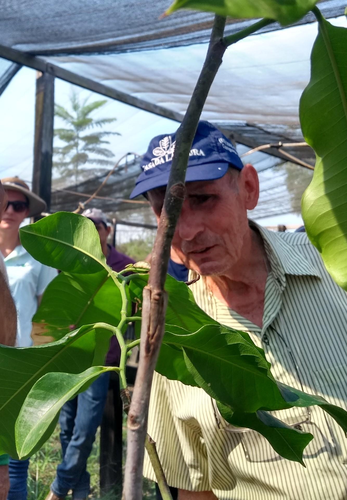 Participantes aprendem diversas técnicas de enxertia no viveiro da Fazenda São Nicolau (Foto: Saulo Thomas)