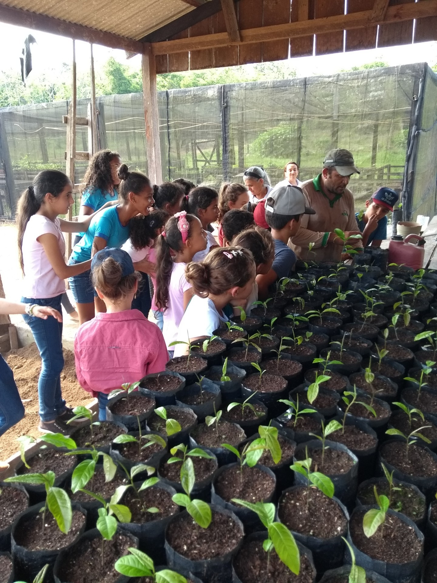 Alunos de escolas públicas de Cotriguaçu visitam o viveiro de mudas da Fazenda São Nicolau (Foto: Acervo ONF Brasil)