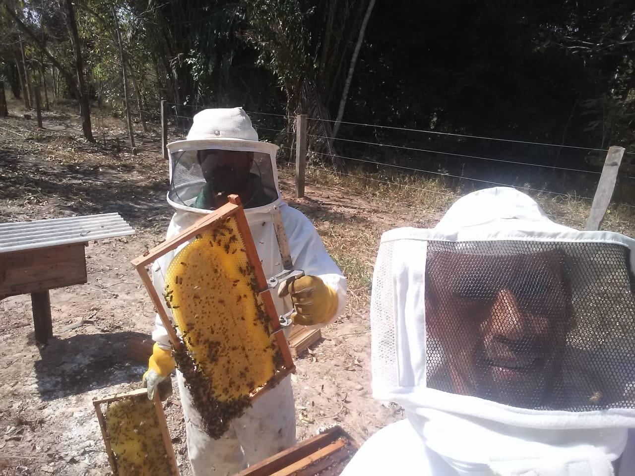 O mel das primeiras caixas de abelha é compartilhado com os colaboradores e turistas (Foto: Saulo Thomas/ONF Brasil)