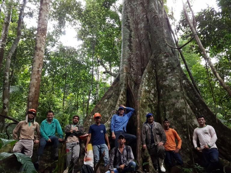 Grupo instala parcelas permanentes de monitoramento da floresta na Fazenda São Nicolau (Foto: Acervo ONF Brasil)
