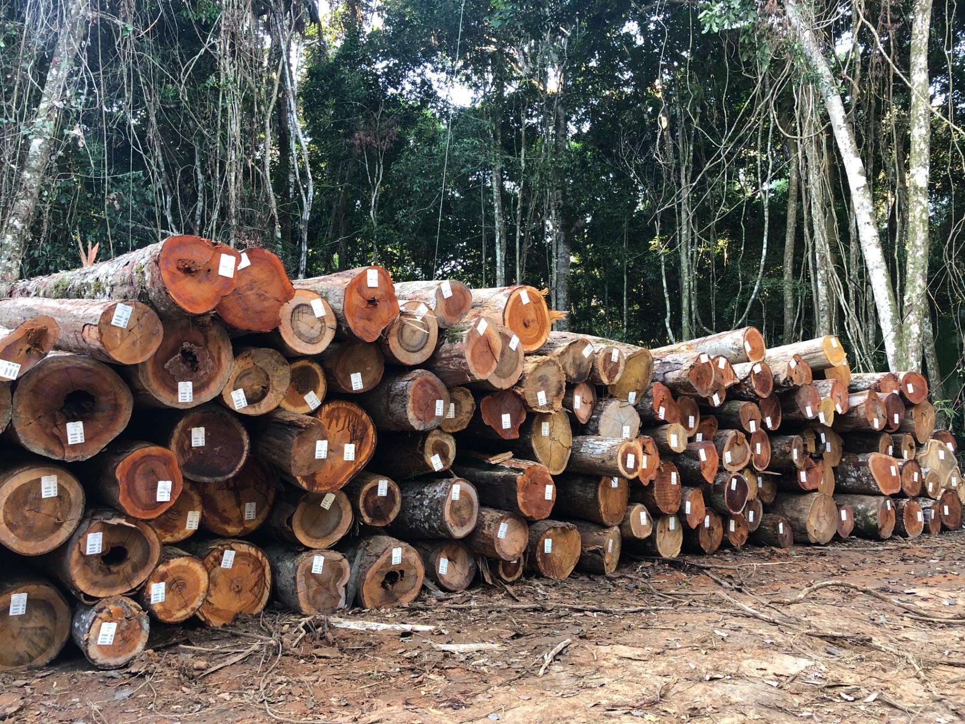 Pilha de toras de madeira devidamente etiquetadas, oriundas do Plano de Manejo Florestal Sustentável da Fazenda São Nicolau (Foto: Acervo da ONF Brasil)