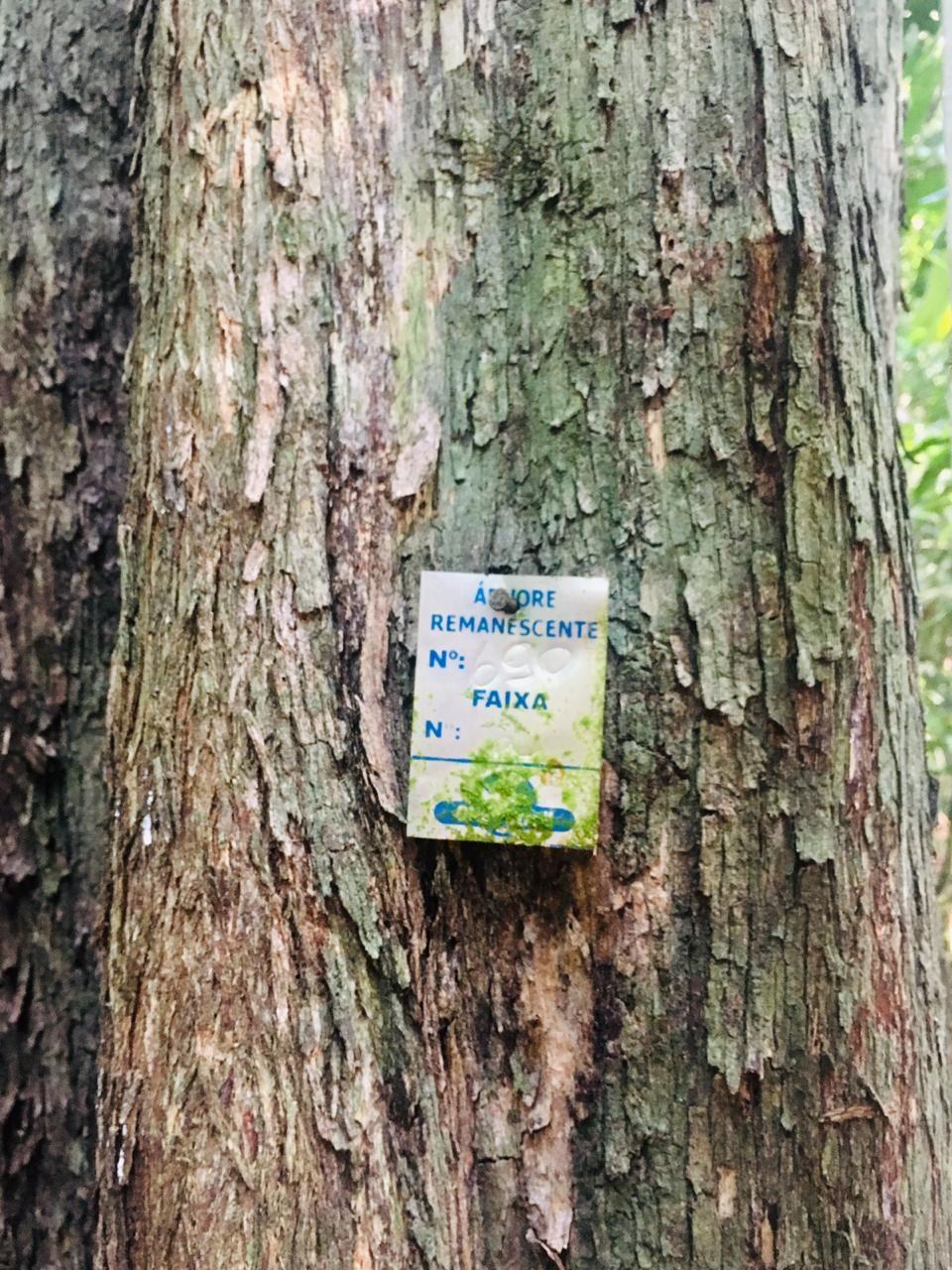 ONF Brasil planeja e executa manejo florestal sustentável de forma responsável (Foto: Acervo da ONF Brasil)