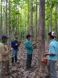 As equipes medem as árvores e inserem os dados no sistema (Acervo ONF Brasil)